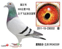 国王号2011-15-230332雄