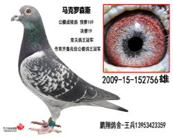 马克2009-15-152756雄
