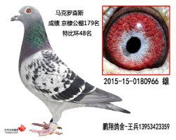 马克2015-15-0180966雄