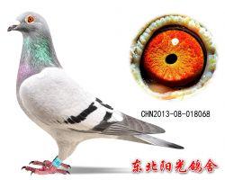 10、CHN2013-08-018068副本