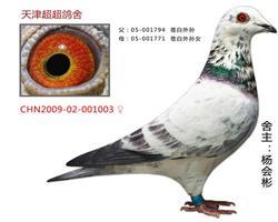 超超CHN2009-02-001003