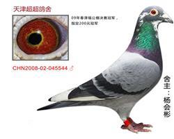 超超CHN2008-02-045544