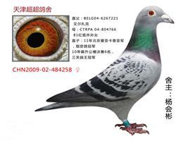 超超CHN2009-02-484258