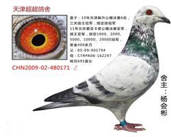 超超CHN2009-02-480171