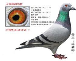 超超CTRPA10-611150