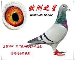 """""""王子330""""X""""欧洲之星802近亲"""""""