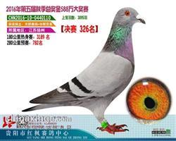 贵州红枫326名汉斯戈马利电脑