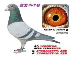 魅力967号雄