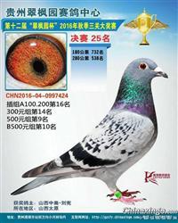 2016年秋贵州翠枫园公棚决赛25名!