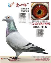 2016年山东舜峰俱乐部三关鸽王亚军