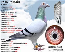 鑫璐443