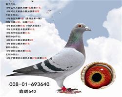 鑫璐640