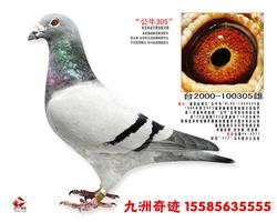九洲奇迹鸽业祝全国鸽友新年快乐!