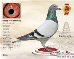 2015年陕西威力决赛10名三关鸽王亚军