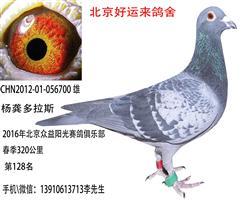 北京众益阳光赛鸽俱乐部春320公128名