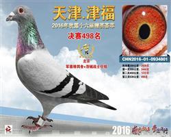 津福498