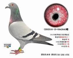 杨龚多拉斯640