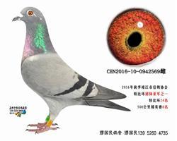 杨龚多拉斯659