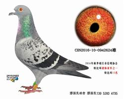 杨龚多拉斯624