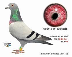 杨龚多拉斯626