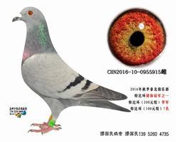 杨龚多拉斯915
