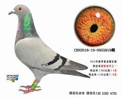杨龚多拉斯919