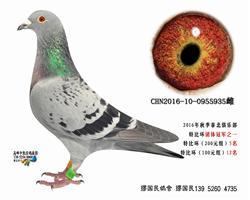 杨龚多拉斯935
