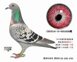 杨龚多拉斯938