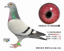 杨龚多拉斯939