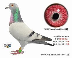 杨龚多拉斯926