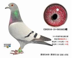 杨龚多拉斯925
