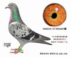 杨龚多拉斯927