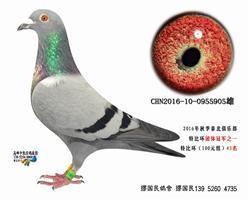 杨龚多拉斯905