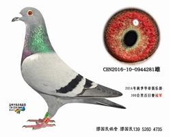 杨龚多拉斯281