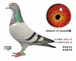 杨龚多拉斯292
