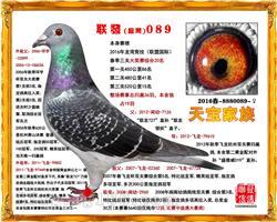 联发089(已售内蒙古)