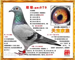 联发079(已售四川)