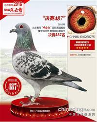 北京惠翔国际赛鸽公棚487位
