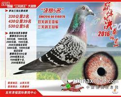 """罗森・波斯""""闪电号""""三关鸽王冠军"""
