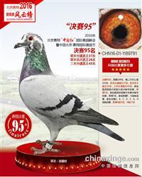 2016惠翔公棚决赛95名