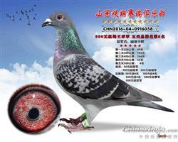 16年秋铁翔五关综合500元季军