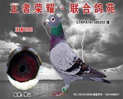 细川势山:王者292