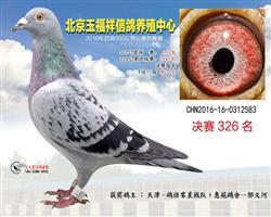 北京玉福翔决赛326名