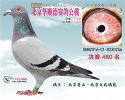 北京华顺德公棚决赛460