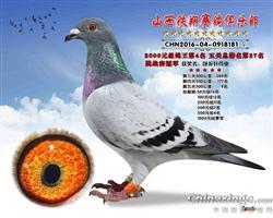 铁翔挑战赛伯马冠军