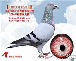 龙鑫公棚33名