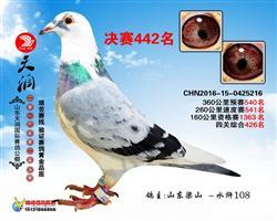 2016天润国际赛鸽公棚442名