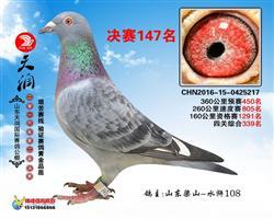 2016天润国际公棚147名