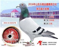 2016山东乐陵金鑫公棚22名