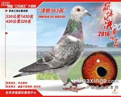 友祥京福决赛263名成绩鸽